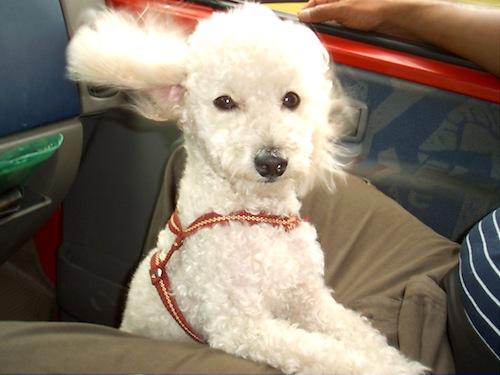 dog-friendly car