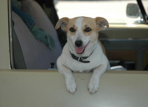 Dog-friendly car.